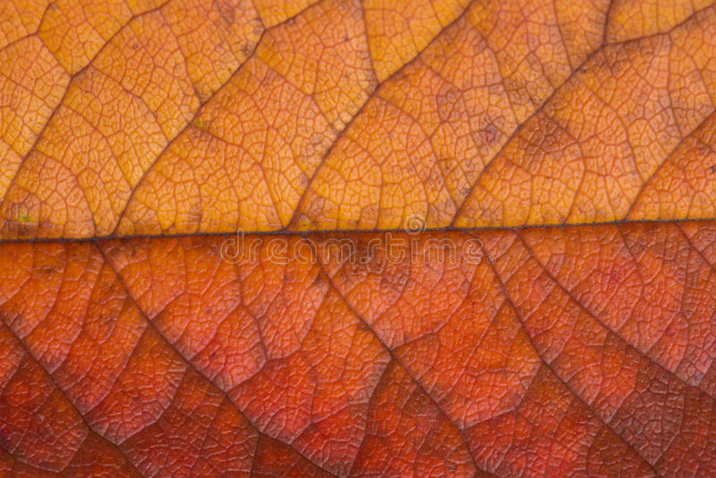 Struktur des Herbstblattes lizenzfreies stockfoto
