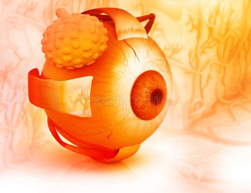 Struktur des menschlichen Auges vektor abbildung