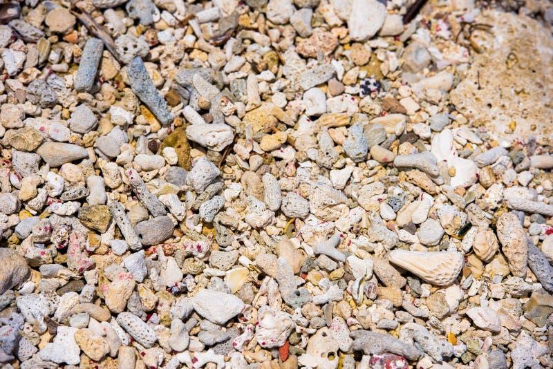 struktura Łuska plażę w Bayahibe, los angeles Altagracia, republika dominikańska Zakończenie zdjęcia stock