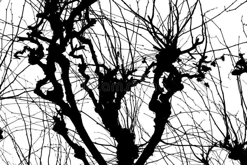 struktura Isolant na białym tle Czarna biała sylwetka grafit rozgałęzia się drzewa royalty ilustracja