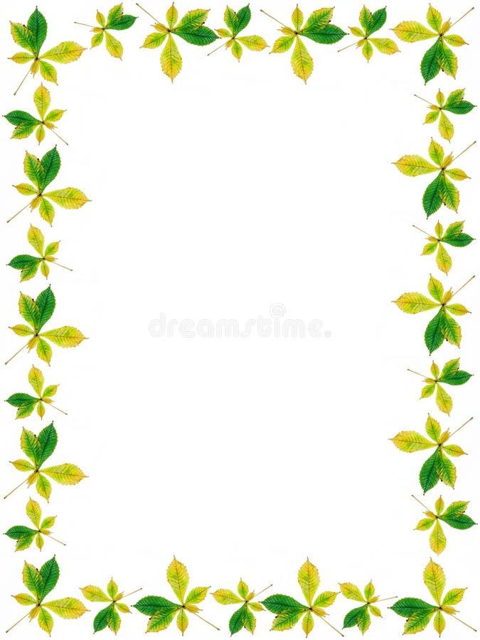 struktura liści, ilustracji