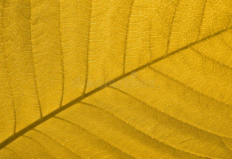 struktura liści jesienią zdjęcia royalty free