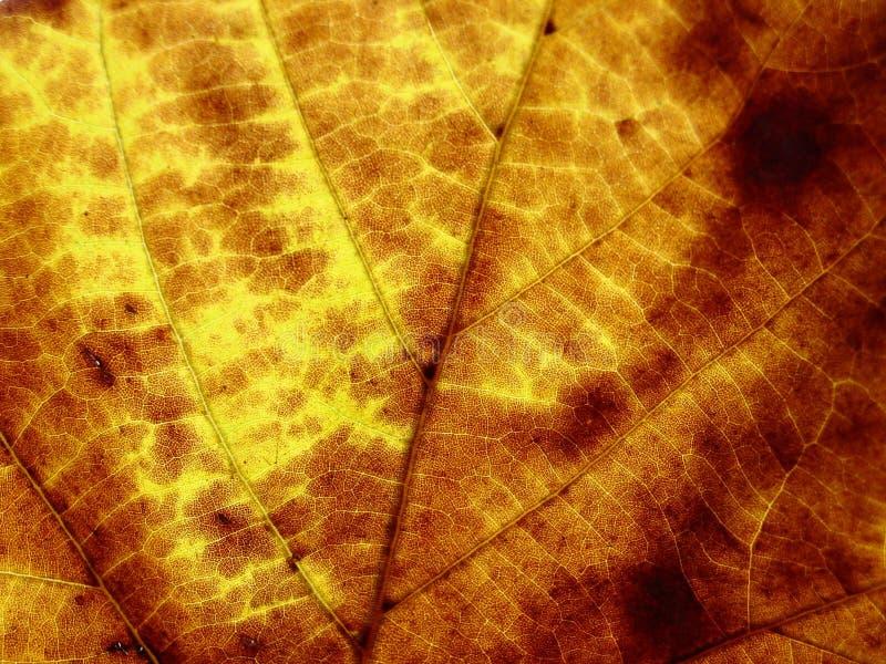Download Struktura liści, zdjęcie stock. Obraz złożonej z tło, jesienny - 36342
