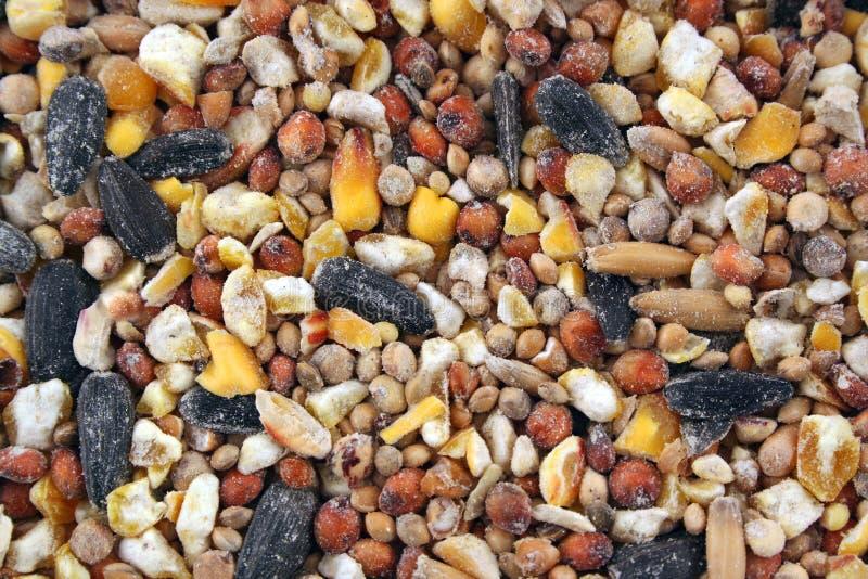 struktura ptaka tła nasion obrazy stock