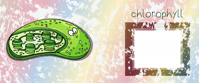 Struktura typowa roślina chloroplasta chloroplasta struktura z teksta chlorofilem i opróżnia pudełko dla teksta ilustracji