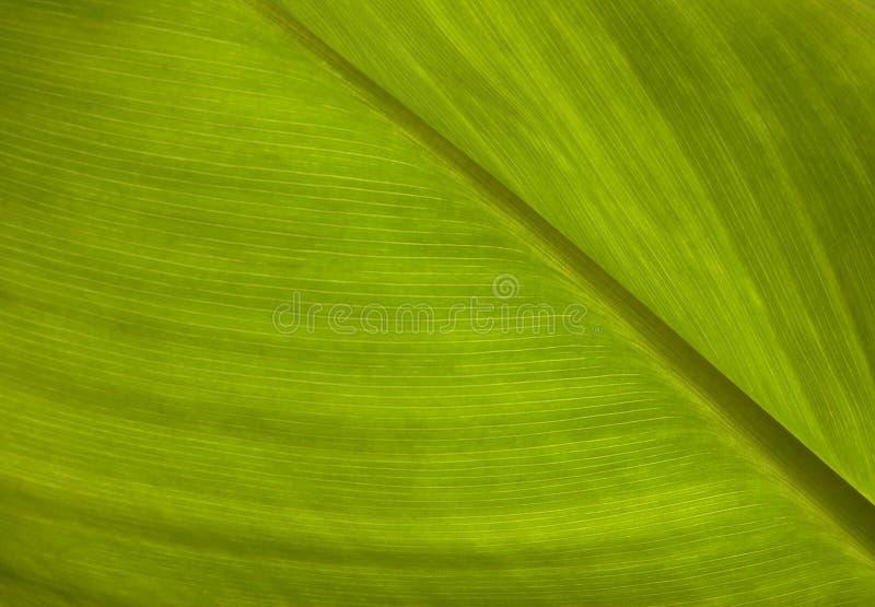 struktura zielonych liści fotografia royalty free