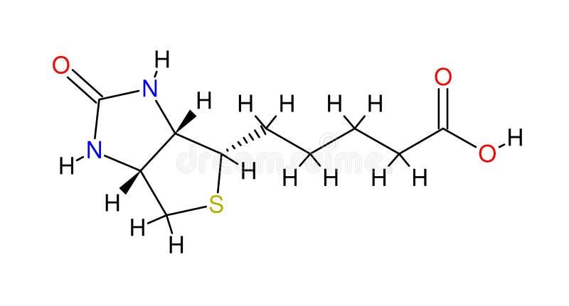strukturell biotinformel royaltyfri illustrationer