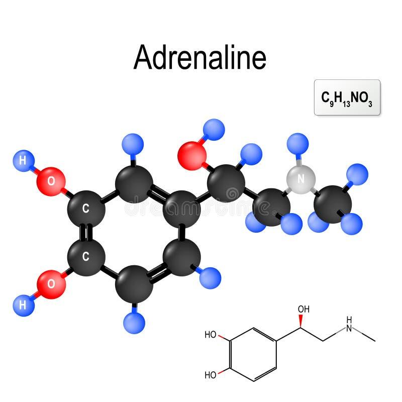 Strukturell kemisk formel och modell av molekylen av adrenalin stock illustrationer