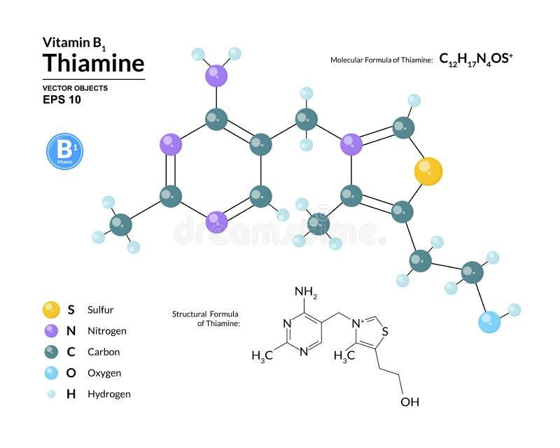 Strukturell kemisk molekylär formel och modell av thiamine Atomer föreställs som sfärer med att kodifiera för färg royaltyfri illustrationer
