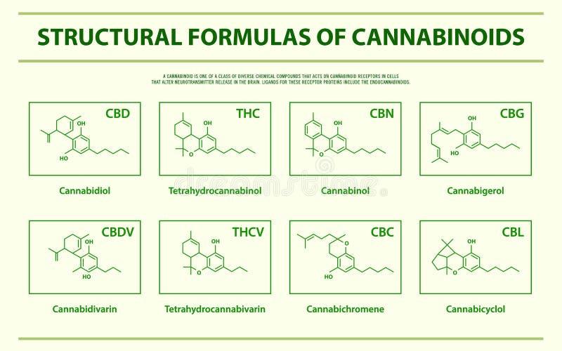 Strukturella formler av horisontalinfographic för huvudsakliga naturliga cannabinoids stock illustrationer