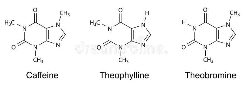 Strukturella kemiska formler av purinealkaloider (koffein, theophylline, theobromine) vektor illustrationer