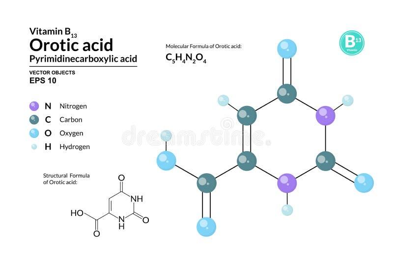 Strukturelle chemische molekulare Formel und Modell der Orotsäure Atome werden als Bereiche mit Farbkennzeichnung dargestellt lizenzfreie abbildung