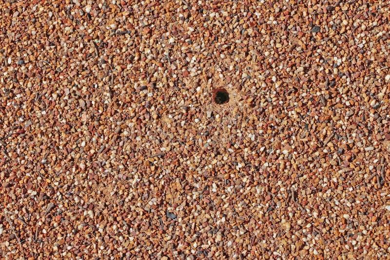 Strukturierter Ameisenhügelhintergrund stockfotos