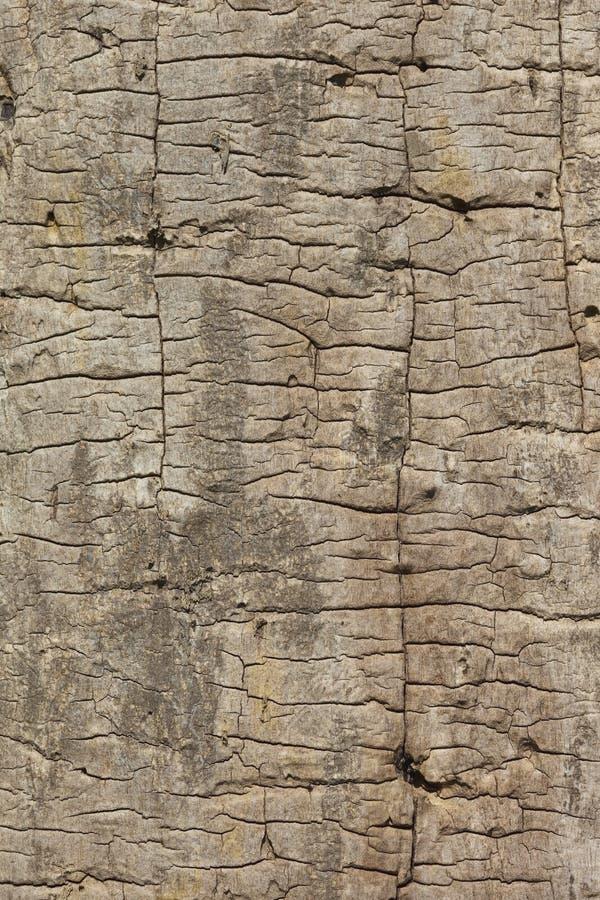 Strukturierter Aschholzhintergrund stockfotografie