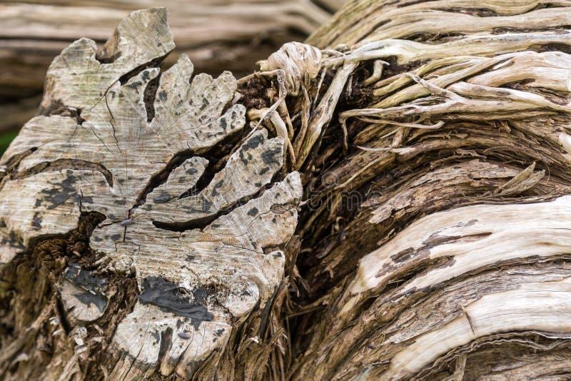 Strukturierter Baum lizenzfreies stockfoto