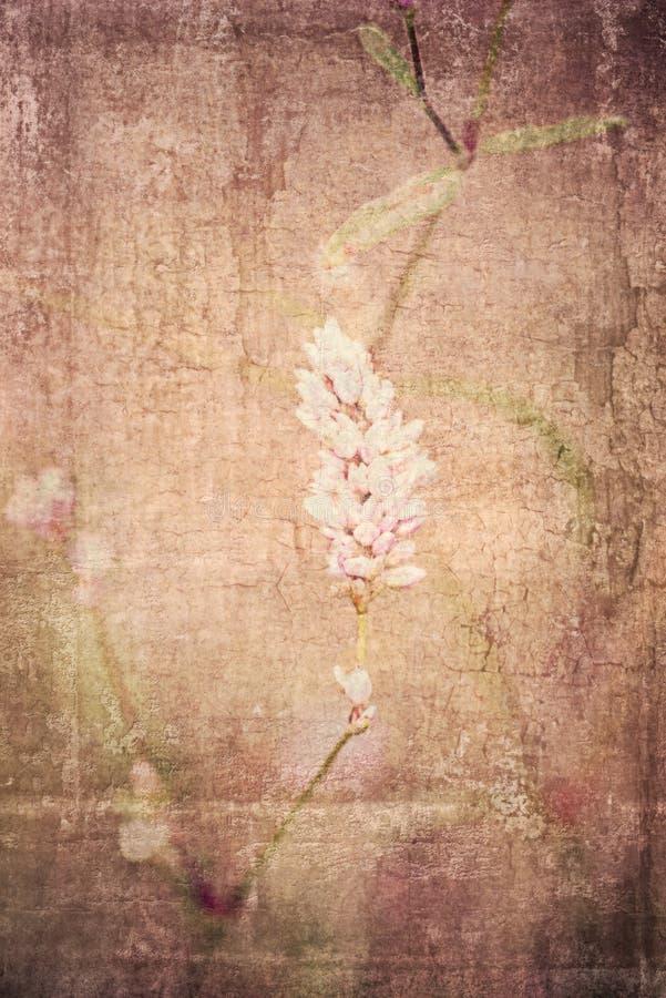 Strukturierter Blumenhintergrund stockfotografie