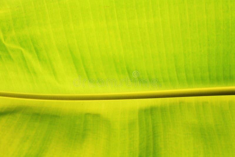 Strukturierter Hintergrund des grünen Blattes der Banane lizenzfreies stockbild