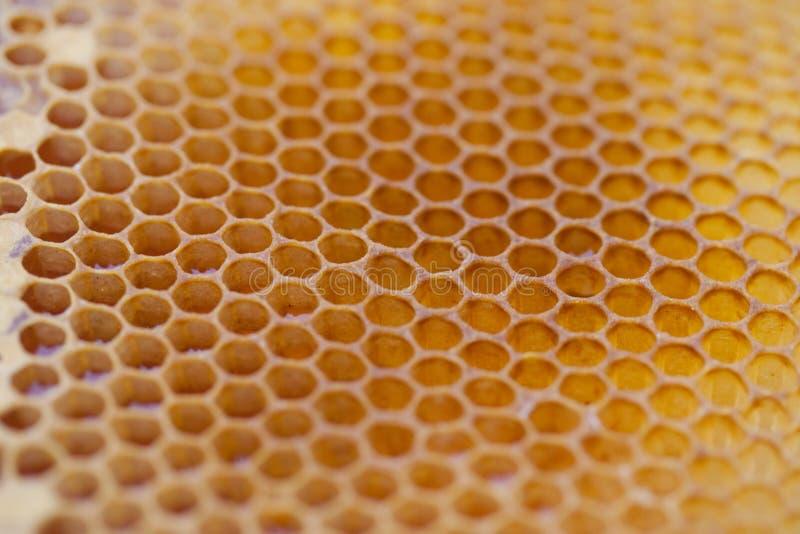 Strukturierter Honig-Kamm stockbilder
