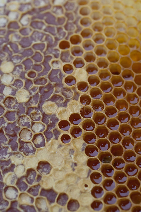 Strukturierter Honig-Kamm 6 stockfotos