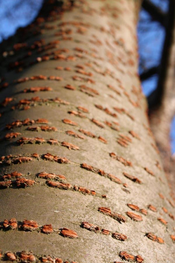 Strukturiertes Baumkabel stockbilder