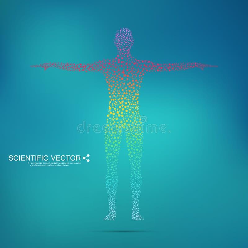 Strukturmolekül des Mannes DNA menschlicher Körper des abstrakten Modells Medizin, Wissenschaft und Technik Wissenschaftlicher Ve vektor abbildung
