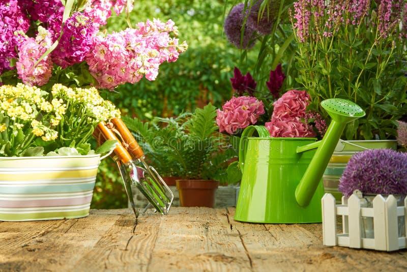 Strumenti di giardinaggio sulla tavola di legno nel giardino fotografia stock