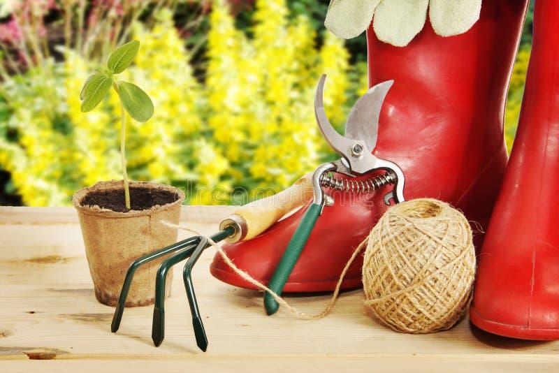 Strumenti di giardino con gli stivali di gomma e la piantina fotografia stock