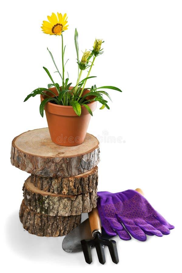 Download Strumenti E Fiori Di Giardinaggio All'aperto Fotografia Stock - Immagine di agricoltura, closeup: 117979056