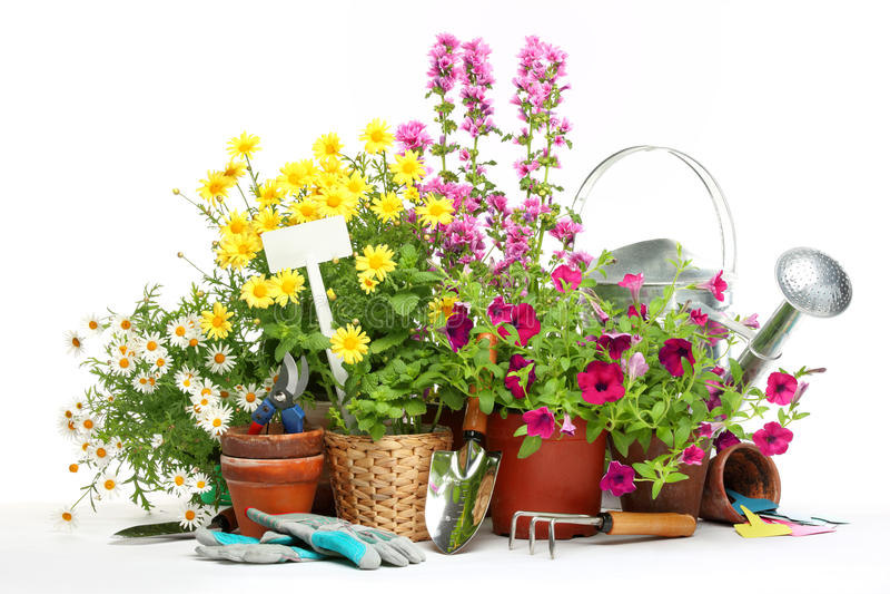 Strumenti e fiori di giardinaggio immagine stock for Giardinaggio e fiori