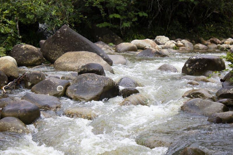Strumień w lesie tropikalnym obrazy stock