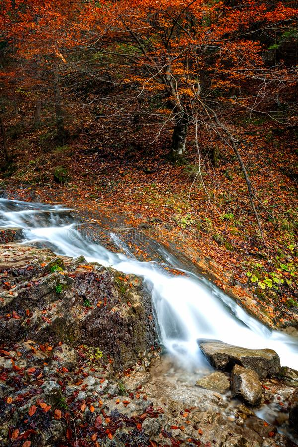Strumień w jesień lesie obraz royalty free