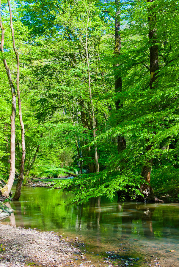 Strumień w lesie zdjęcia royalty free
