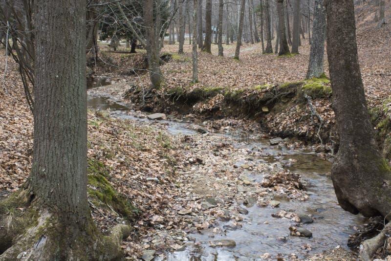 Strumień w lesie w zimie obraz stock