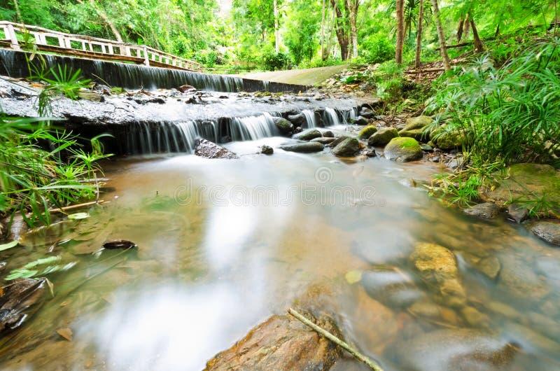 Strumień w tropikalnych las tropikalny zdjęcie royalty free