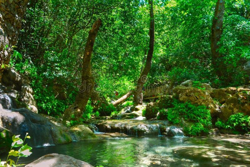 Strumienia spływanie przez drzew pionowo obraz stock