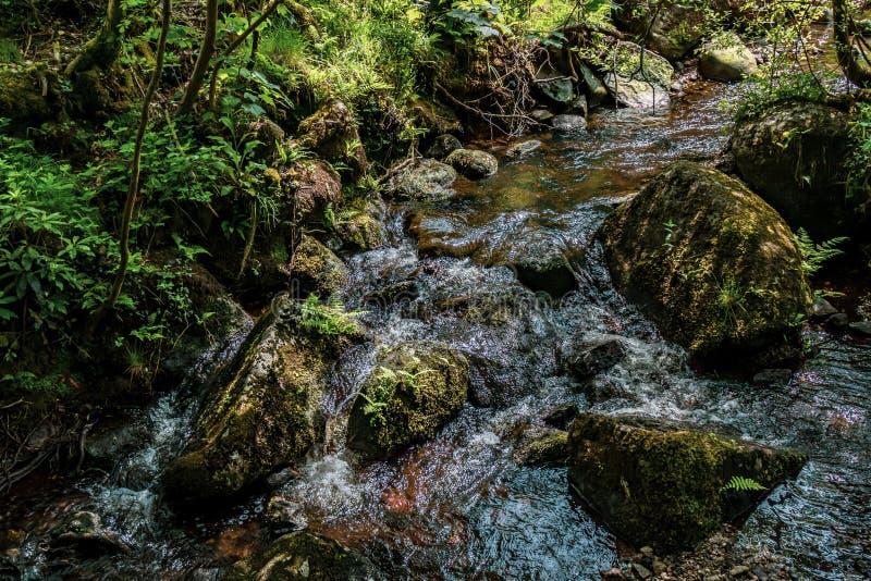 Strumienia spływanie w Dartmoor parku narodowym obraz royalty free