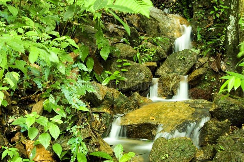 strumienie dżungli zdjęcia royalty free