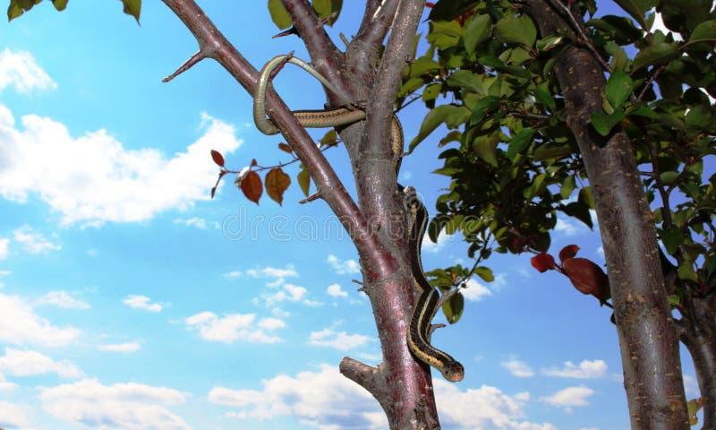 Strumpebandorm och himmel royaltyfri foto