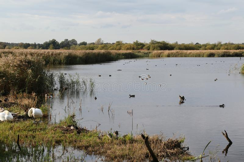 Looking out at Strumpshaw Fen. Strumpshaw Fen is a RSPB bird reserve on the River Yare near Norwich, Norfolk royalty free stock photos
