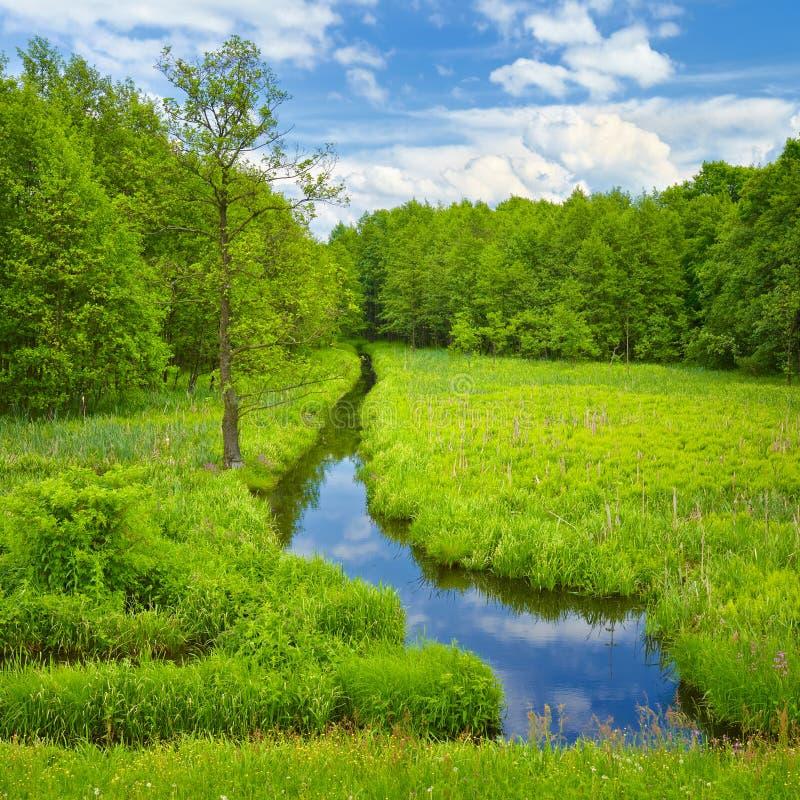Strumyk, łąka i las. zdjęcia royalty free