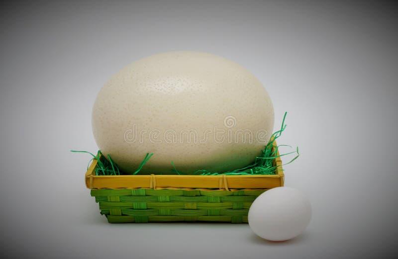 Strusi jajko i kurczaka jajko obraz stock