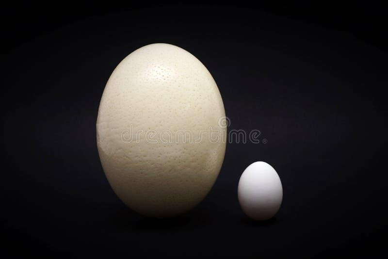 Strusi jajko i kurczaka jajko obrazy royalty free