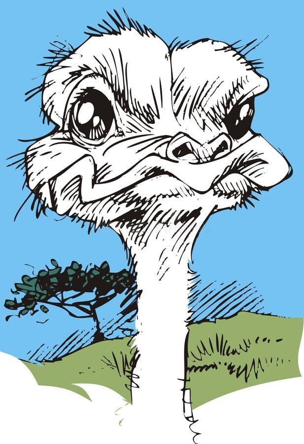 he strusi Struś lub Pospolity Struś, gatunkiem jesteśmy jeden lub dwa wielcy ptaki rodzimi Afryka ilustracja wektor