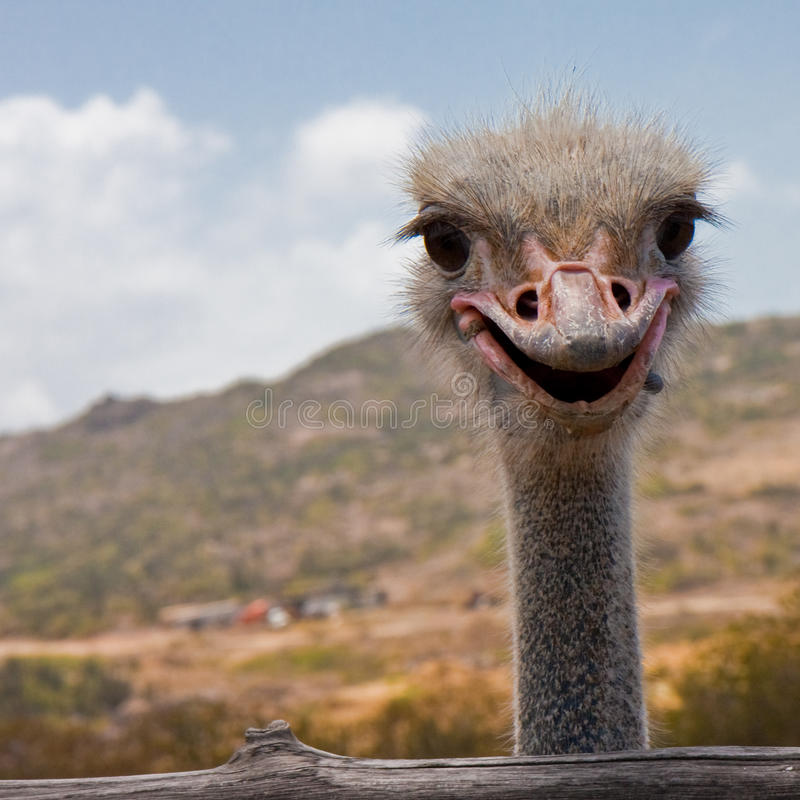 strusi uśmiech obraz stock