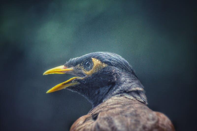 Strusia twarz gniewny bird zdjęcie stock