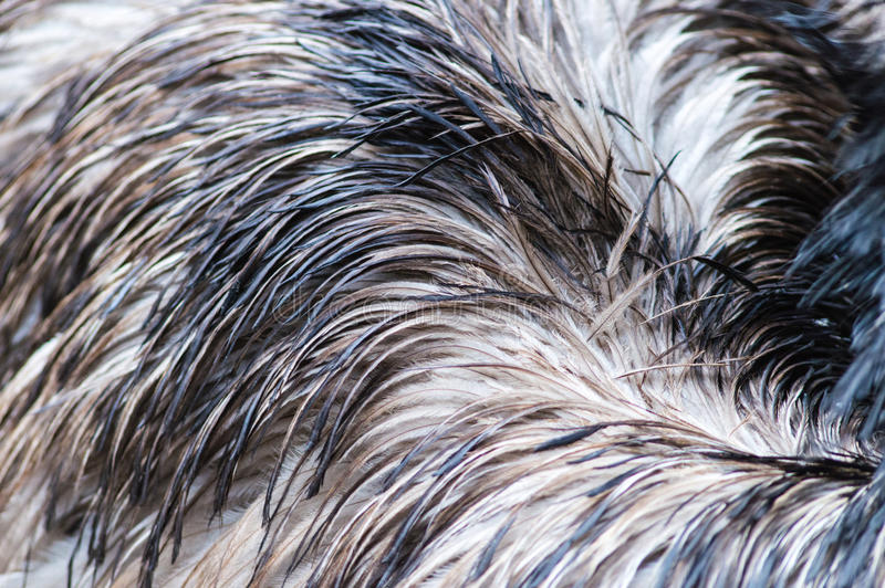 Strutsfjäderbakgrund royaltyfria foton