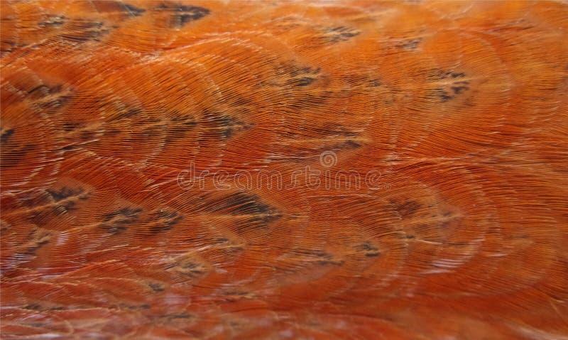 Struttura arancio delle piume del pollo fotografie stock