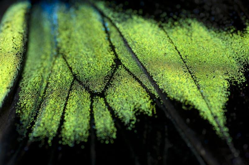 Struttura astratta dell'ala della farfalla fotografia stock