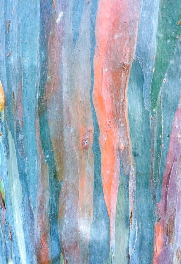 Struttura astratta variopinta del modello della corteccia di albero dell'eucalyptus fotografia stock libera da diritti