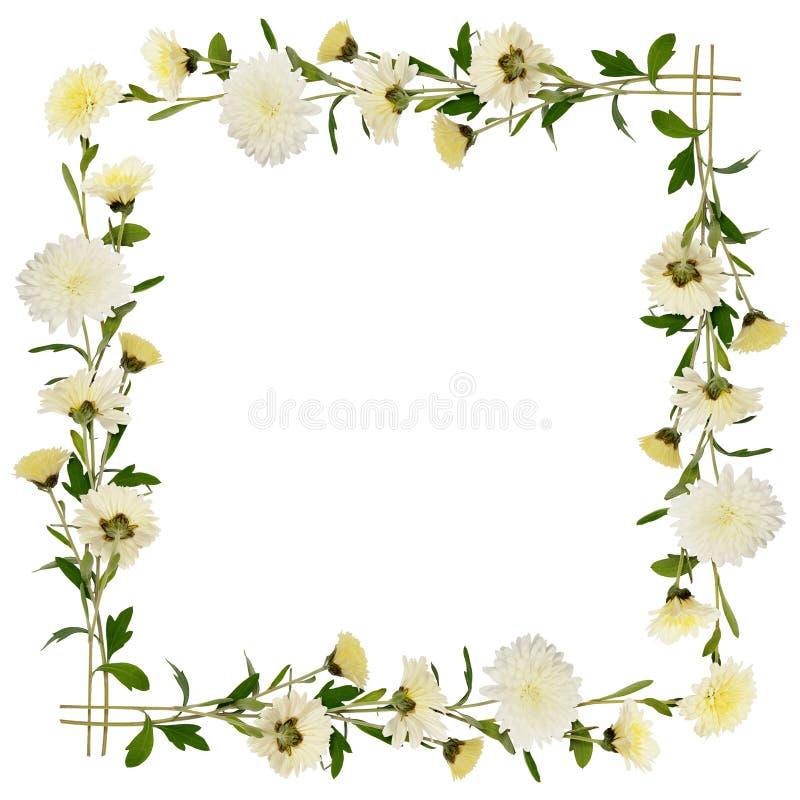 Struttura bianca dei fiori e dei germogli del crisantemo fotografia stock libera da diritti